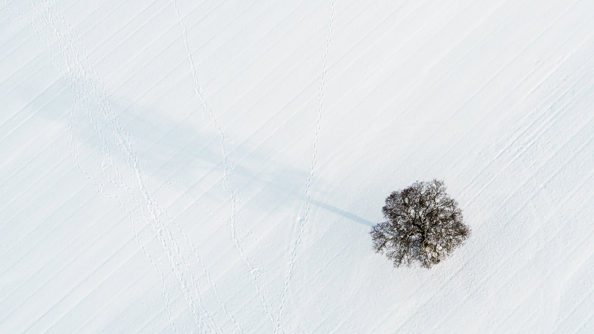 Tree in the Snow-1